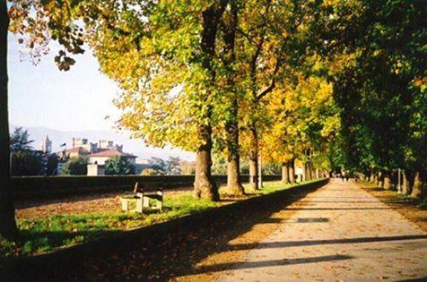 L'immagine può contenere: albero, pianta, cielo, spazio all'aperto e natura
