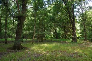 Presentata la brochure 'Aree protette Cerbaie-Bientina-Sibolla-Riserve Naturali'
