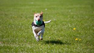 Un cane che gioca in un parco