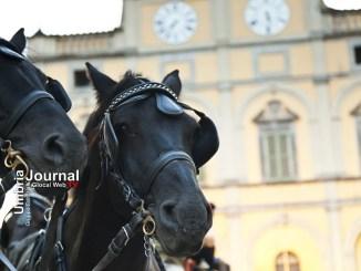Anteprima Cavalli in città comincia Mostra del Cavallo a Castello