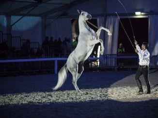 La Mostra Nazionale del Cavallo torna l'8 e il 9 settembre 2018La Mostra Nazionale del
