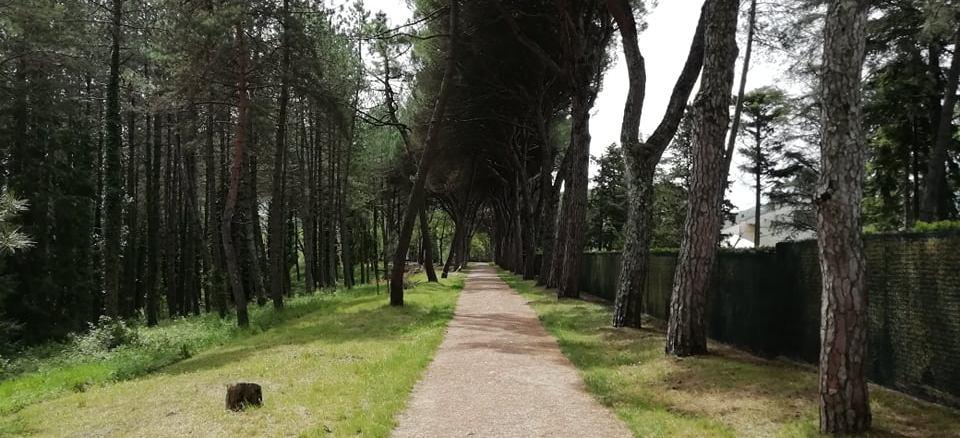 Riqualificazione della Pineta e del Parco Ranieri, approvato il progetto definitivo