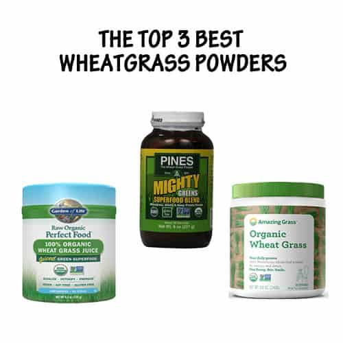the top 3 best wheatgrass powders