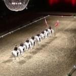 Decoração da performance dos Cavalos Lipizzan
