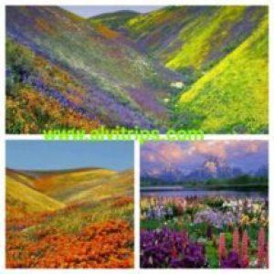 फूलों की घाटी के सुंदर दृश्य