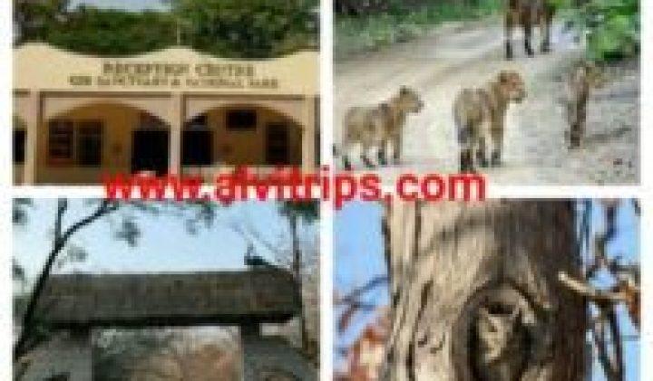 गिर नेशनल पार्क – गिर राष्ट्रीय उद्यान की रोचक जानकारी