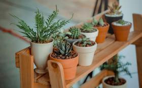 كيف تختارين النباتات المنزلية المناسبة لصحة طفلك؟