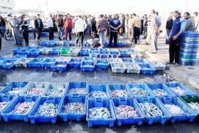الزراعة بغزة توضح أسباب ارتفاع أسعار الأسماك في القطاع