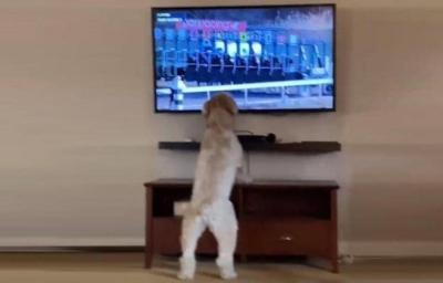 """أكثر من مليوني مشاهدة على """"تيك توك"""" لهذا الكلب.. والسبب يثير العجب (شاهد)"""