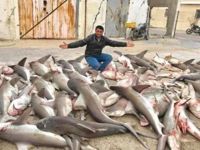 سمكة قرش تنهش قدم صياد في خانيونس