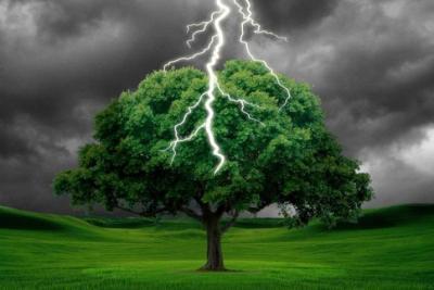 برق يقسم شجرة إلى نصفين (شاهد)
