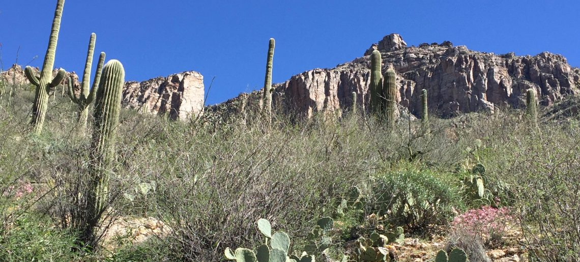 Reflections on the International Biogeography Society Meeting in Tucson: Celebrating diversity and deep time