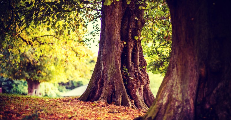 When the Storms of Life Come: How Secure Are My Roots?