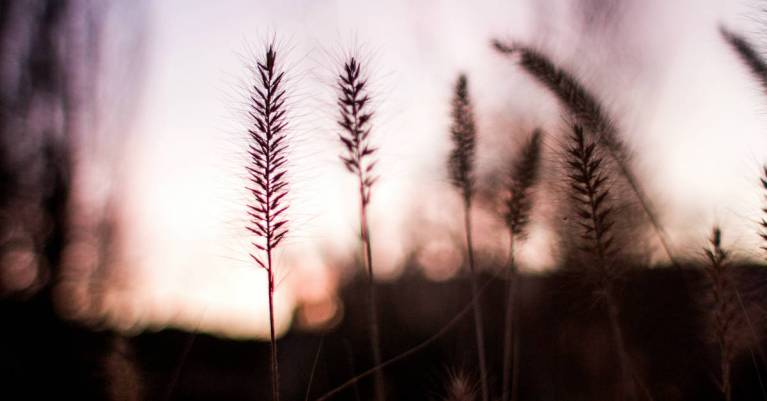 Did Jesus Break the Sabbath Day?