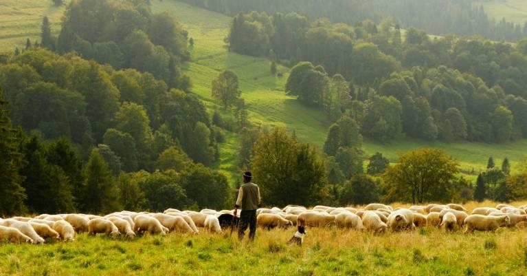 Knowing the Shepherd's Voice: 5 Spiritual Truths About False Teachers
