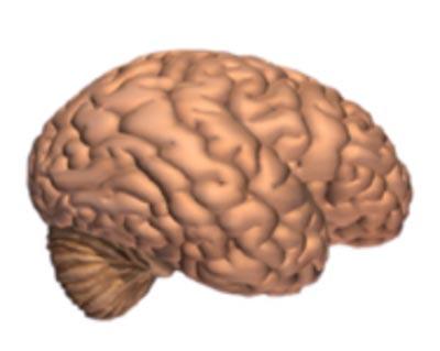 Brain Tissue