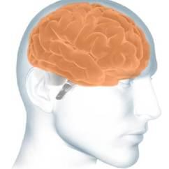 Brain Diagram Inside 2008 Dodge Ram Wiring The Basics Alzheimer S Association Cerebrum