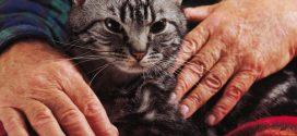 قطتك قد تصيبك بالزهايمر… فاحذرها