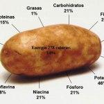 Patatas, Polifenoles, Alzheimer & Parkinson