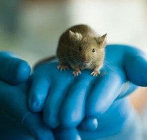 raton-laboratorio