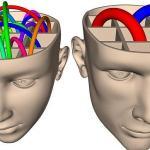 FOTOLIA Los estudios de neuroimagen encuentran diferencias. Pero ¿sus conclusiones son fiables?