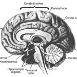 La amnesia destruye memoria e imaginación