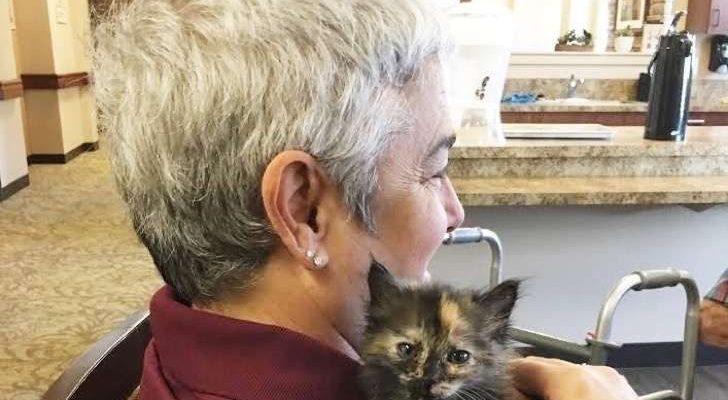Gatitos y Abuelos con Alzheimer
