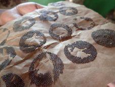 graines de ver a soie