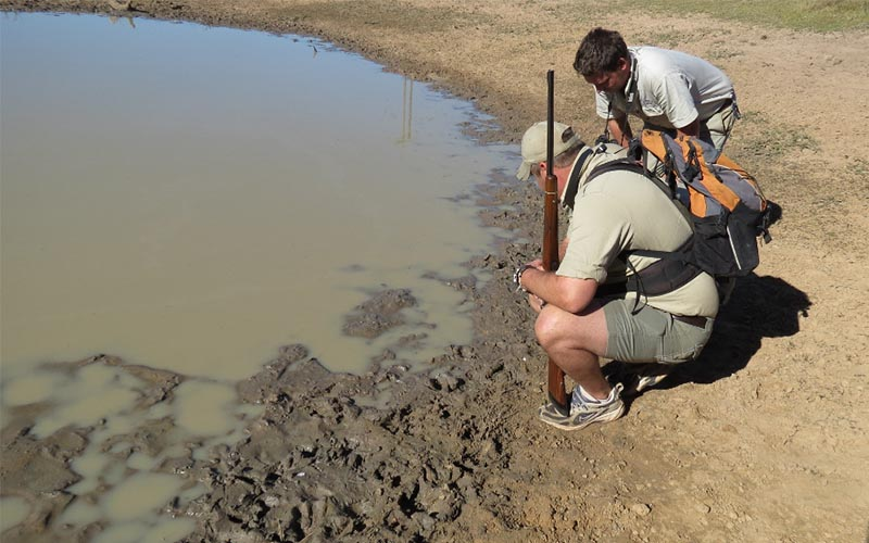 Amakhala   Activities   Guided Walks   Following Spoor