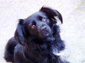 cicciola, our dog :)