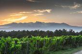 wine-tasting-naples_14