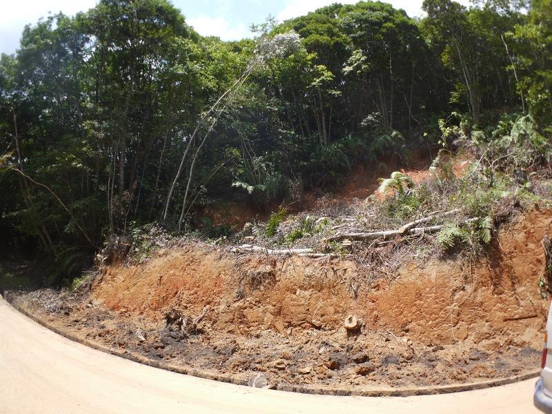 修復された道と斜面