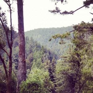 Luz's backyard in Santa Cruz County
