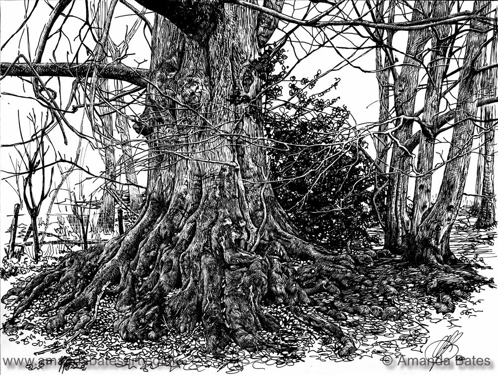 Ancient beech tree on Hungerford Common
