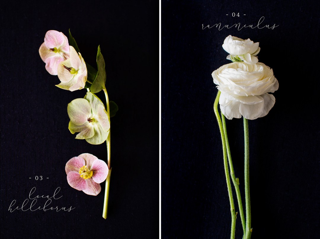Helleborus | Ranunculus Flower flat lay