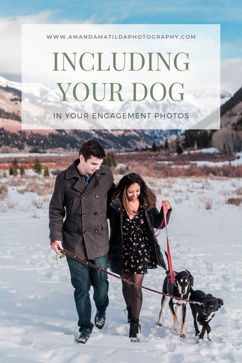 Including Your Dog in Your Engagement Photos | Amanda Matilda Photography
