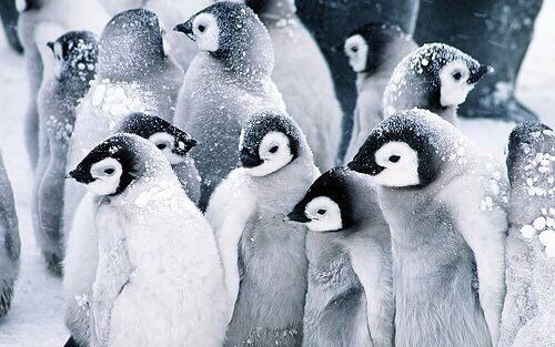 amandaricks.com/penguin-love/