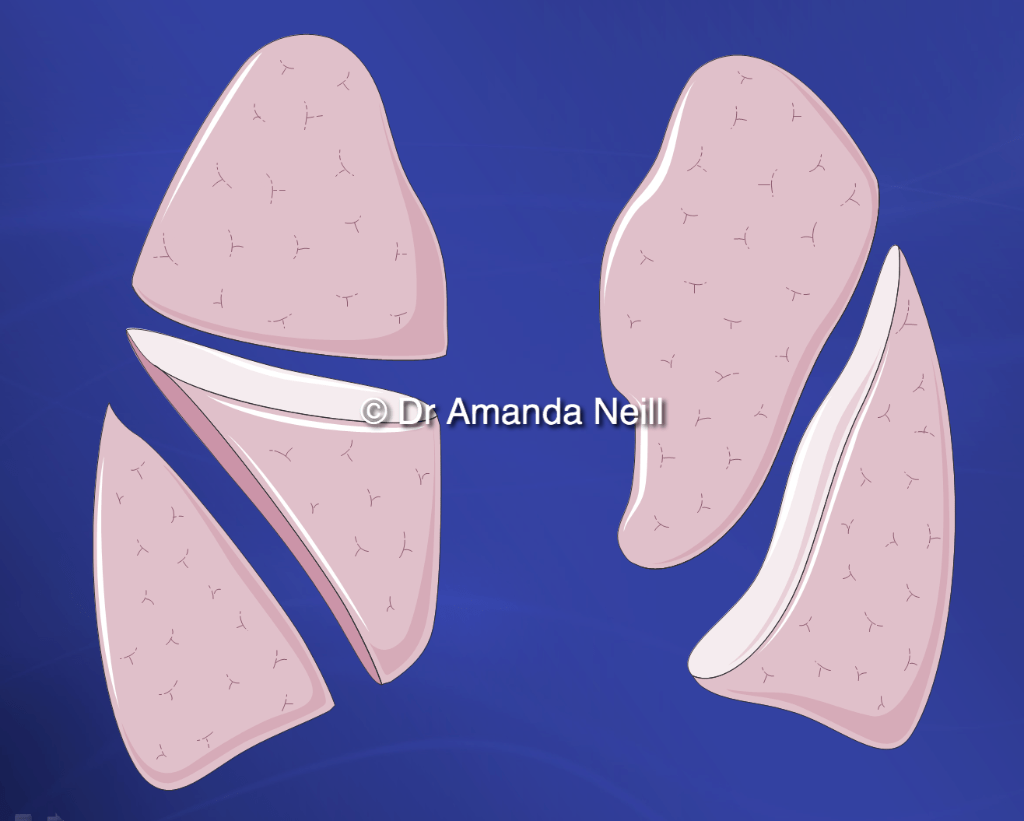 Amanda S A To Z Medical Pocket Books