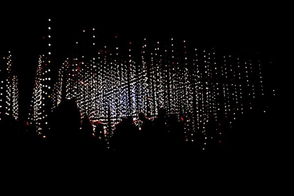 strings of lights at the Enchanted Forest