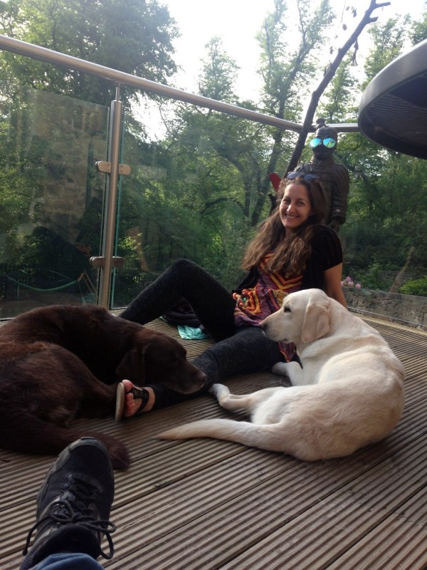 living the dream, surrounded by dogs