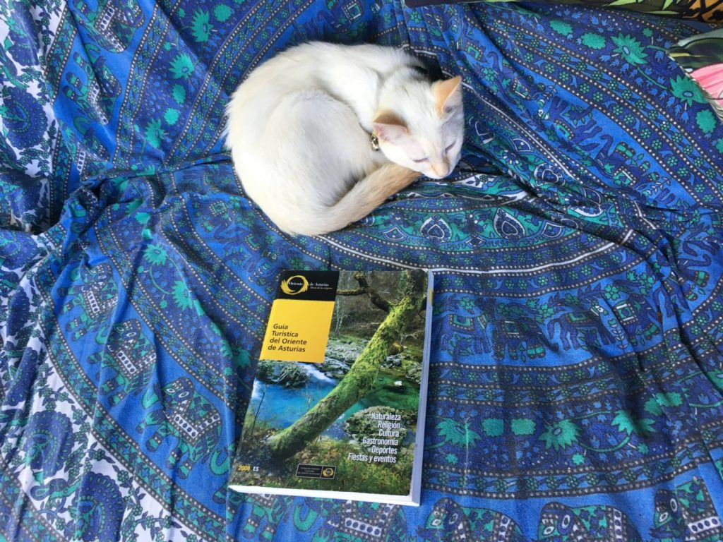 Visit Asturias - kitten curled up next to a guide book