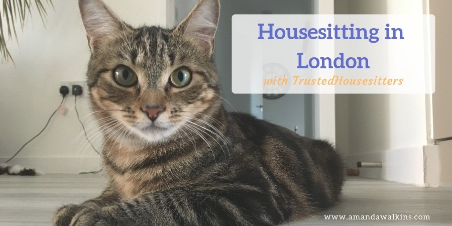 Housesitting in London with TrustedHousesitters