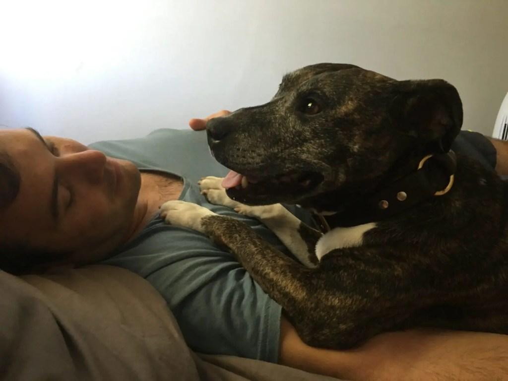 TrustedHousesitters Jonathan Clarkin dogsitting