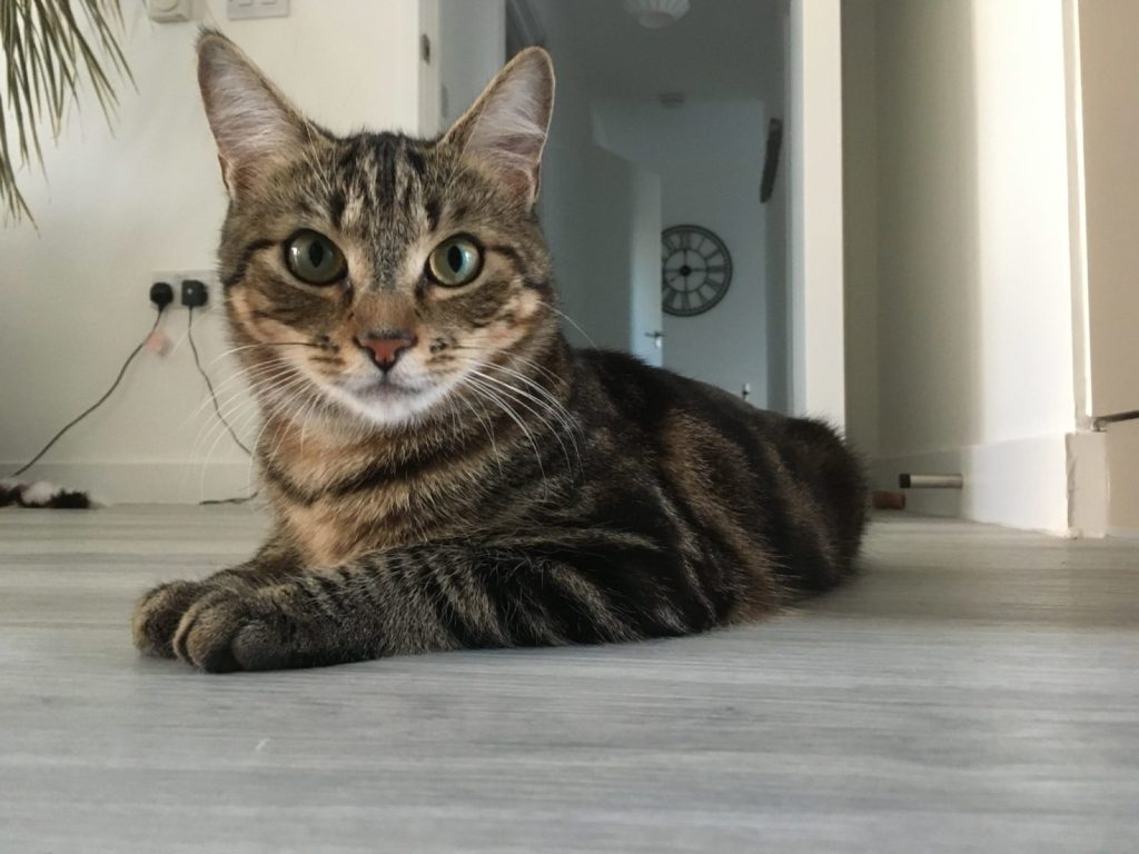 Catsitting Pippin in London