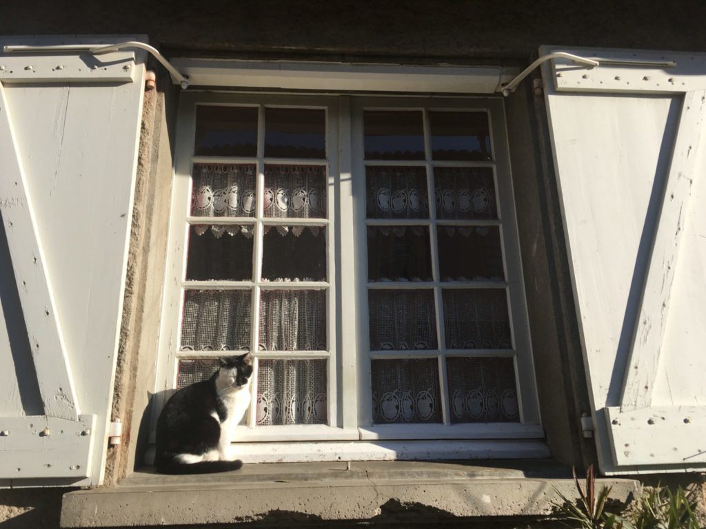 black and white cat sits on a windowsill in a village of southern France