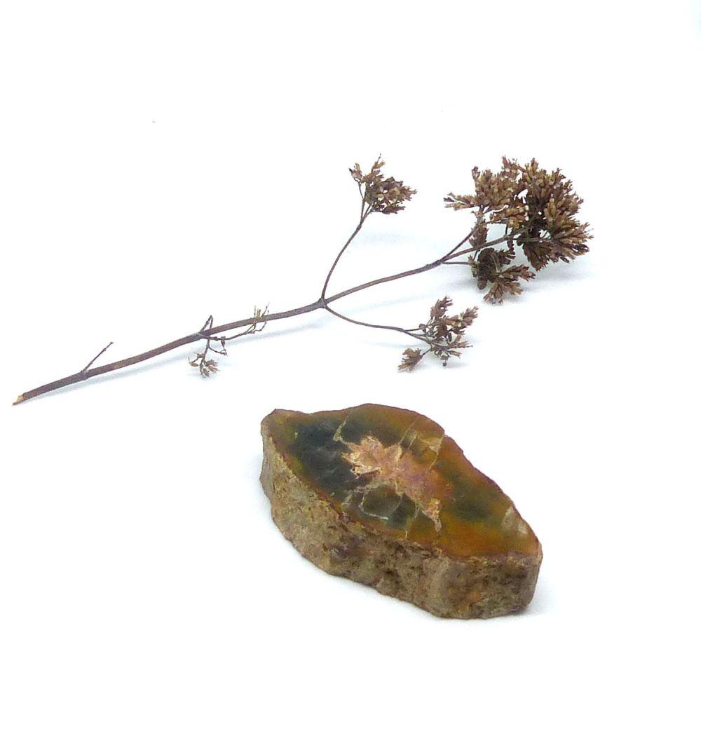 Tranche de bois fossile, modèle 3