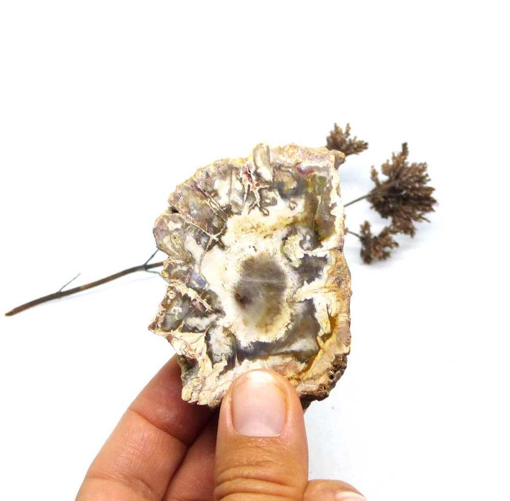 Tranche de bois fossile, modèle 5