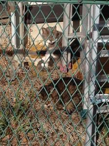 cat140611