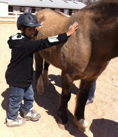 Equine Assisted Learning for Kids
