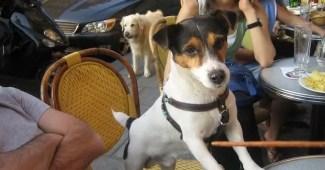 cafeterias que permiten mascotas
